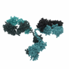 Mouse Anti Nipah Virus Glycoprotein G (JB3)